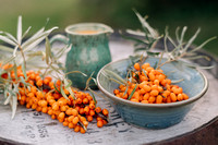 2019/09/16 Sea Buckthorn Berries for Edible Ottawa
